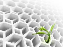 El brote de la flor crece a través de la estructura blanca Foto de archivo libre de regalías