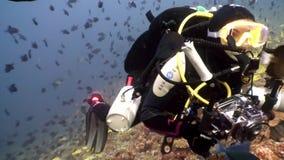 El buceador en submarino de los pescados de la escuela relaja el fondo almacen de metraje de vídeo