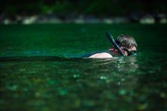 El bucear adulto joven en un río Fotografía de archivo