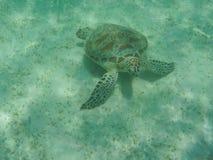 El bucear con la tortuga de mar Imágenes de archivo libres de regalías