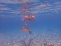 El bucear con las opiniones de Curaçao de las tortugas Fotografía de archivo libre de regalías