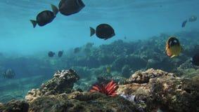 El bucear con los pescados tropicales Imagenes de archivo
