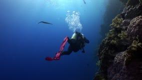 El buceo con escafandra cerca de la escuela de pescados en arrecife de coral relaja el Mar Rojo subacuático almacen de video