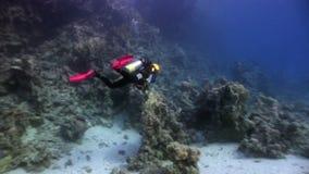 El buceo con escafandra cerca de la escuela de pescados en arrecife de coral relaja el Mar Rojo subacuático metrajes