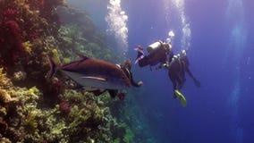 El buceo con escafandra cerca de la escuela de pescados en arrecife de coral relaja el Mar Rojo subacuático