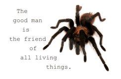 El buen hombre es el amigo de todas las cosas vivas - cite con una tarántula Imagen de archivo libre de regalías