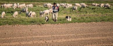 El buen pastor Foto de archivo