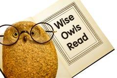 El buho con el libro/los buhos sabios leyó Imagenes de archivo