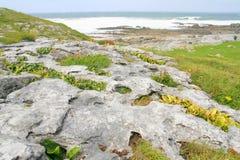 El Burren Fotos de archivo libres de regalías