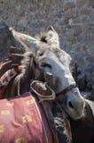 El burro cansado inclina su cabeza en el otro burro ensillado, atracción turística, ciudad de Lindos imágenes de archivo libres de regalías