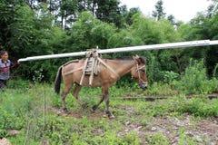 El burro está llevando las mercancías Fotografía de archivo