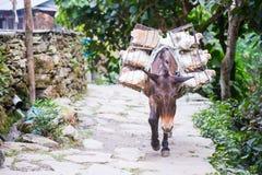 El burro lleva difícilmente de transporte del abastecimiento para comercializar Fotografía de archivo libre de regalías