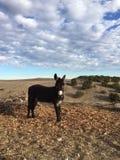 El burro masculino que espera para ser alimentado adentro sequía condiciona con el cielo nublado Imagen de archivo