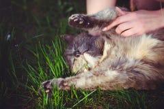 El buscar hace tictac en el gato, mintiendo en la hierba que mira las manos protección de animales contra parásitos imágenes de archivo libres de regalías