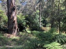El bushland a lo largo del río de Jamieson imagen de archivo