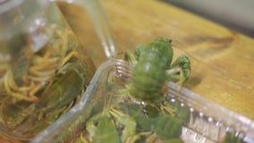 El cáncer verde cogió  cáncer del verde del mamífero Los escapes verdes del cáncer de la caja metrajes