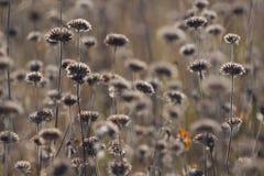 El Cáucaso El otoño de е del ½ del ½ Ð del ¾ Ð de ФРflorece en un prado El fondo no está en foco Imagen de archivo