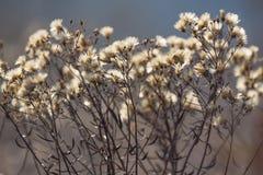 El Cáucaso El otoño de е del ½ del ½ Ð del ¾ Ð de ФРflorece en un prado El fondo no está en foco Imagen de archivo libre de regalías