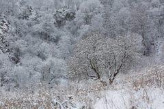 El Cáucaso las montañas de Rusia, Kabardino-Balkaria Escarcha encendido Fotografía de archivo libre de regalías
