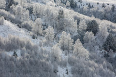 El Cáucaso las montañas de Rusia, Kabardino-Balkaria Escarcha encendido Foto de archivo