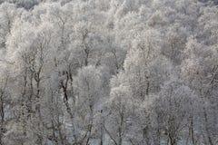 El Cáucaso las montañas de Rusia, Kabardino-Balkaria Escarcha encendido Fotografía de archivo
