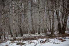 El Cáucaso las montañas de Rusia, Kabardino-Balkaria Escarcha encendido Imagenes de archivo