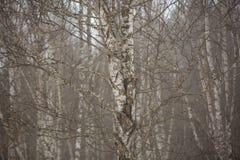 El Cáucaso las montañas de Rusia, Kabardino-Balkaria Escarcha encendido Imagen de archivo