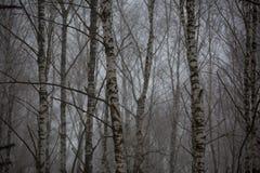 El Cáucaso las montañas de Rusia, Kabardino-Balkaria Escarcha encendido Imágenes de archivo libres de regalías