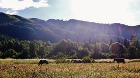 El Cáucaso que sorprende Imagenes de archivo