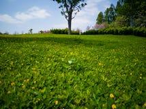 El césped con el árbol verde en primavera imagen de archivo libre de regalías