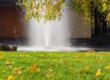 El césped con las hojas caidas contra de la fuente y del abedul ramifica Fotografía de archivo