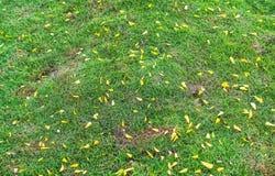 El césped de tierra con las hojas amarillas cae abajo en la hierba Foto de archivo