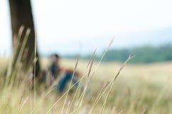 El césped y el adolescente de los oídos del trigo salvaje se sientan cerca de árbol grande en backgroun Fotos de archivo libres de regalías