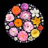 El círculo de la bola de las plantas del verano aisló el collage Fotos de archivo