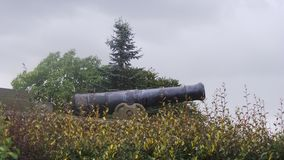 El cañón en un área del arboreto Foto de archivo