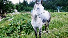 El caballo Imagenes de archivo