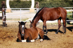 El caballo Fotos de archivo