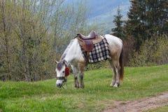 El caballo blanco con la silla de montar pasta en un prado Imagen de archivo libre de regalías