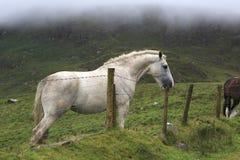 El caballo blanco intenta romper la columna de la cerca Imagen de archivo