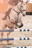 El caballo blanco salta sobre el obstáculo Fotos de archivo