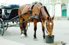 El caballo come avena en una calle de la ciudad Primer foto de archivo