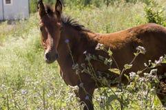 El caballo de Brown es que camina y de consumición de la hierba en el prado con las flores y los árboles lejos travelling imagen de archivo
