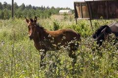 El caballo de Brown es que camina y de consumici?n de la hierba en el prado con las flores y los ?rboles lejos travelling fotos de archivo libres de regalías