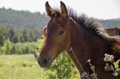 El caballo de Brown es que camina y de consumici?n de la hierba en el prado con las flores y los ?rboles lejos travelling imagen de archivo