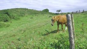 El caballo de Brown está pastando en el prado verde, montaña backgrounded en el día soleado hermoso, comiendo el heno de la hierb metrajes