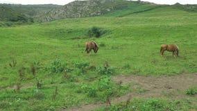 El caballo de Brown está pastando en el prado verde, montaña backgrounded en el día soleado hermoso, comiendo el heno de la hierb almacen de video
