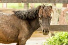 El caballo de Du-sienta el parque zoológico Imagen de archivo libre de regalías