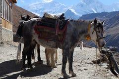 El caballo de la montaña de Nepal es alto en las montañas Imagen de archivo libre de regalías