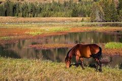 El caballo del Kanas Imagen de archivo libre de regalías