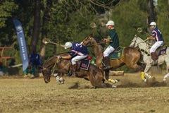 El caballo del mundial de PoloCrosse desliza la acción Foto de archivo
